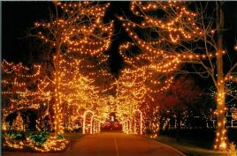 holiday_lights_pic