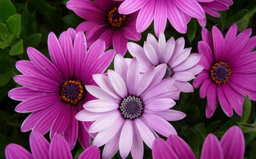 purple-flowers1.jpg
