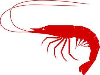 c202339f7a325836a1c29b27ba88621b_free-shrimp-clipart-shrimp-boil-clipart_600-447.png